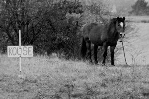 Zlej Kůň - Kouše